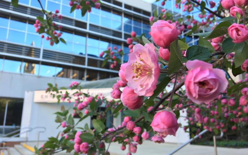 EWFM patio blossoms